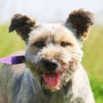 Чуня собака из приюта на пристройство приют для бездомных животных Зов Предков zovpredkov.net