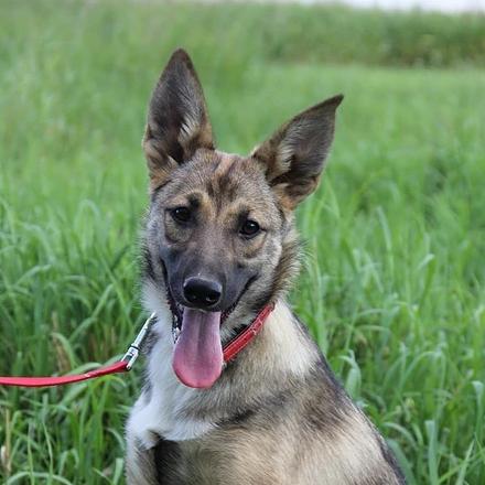 Уша собака из приюта на пристройство -  Уша ищет дом!
