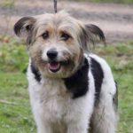 Ватрушка собака из приюта на пристройство