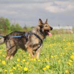 Перец собака из приюта на пристройство, частный приют Зов Предков zovpredkov.net фото 20