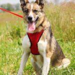 Малибу собака из приюта на пристройство приют для бездомных животных Зов Предков zovpredkov.net фото 5