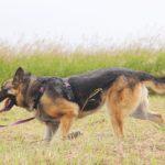 Марта собака из приюта на пристройство, частный приют Зов Предков zovpredkov.net фото 10