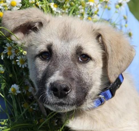Агат собака из приюта на пристройство - Агат ищет дом!