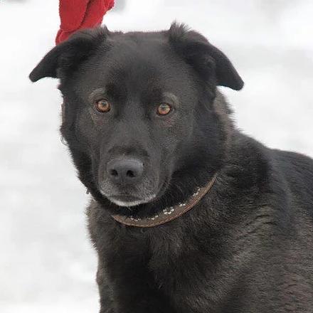 Барон собака из приюта на пристройство -  Барон ищет дом!