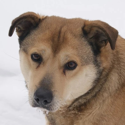 Боша собака из приюта на пристройство - Боша  ищет дом!
