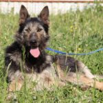 Брауни собака из приюта на пристройство, частный приют Зов Предков zovpredkov.net фото 4