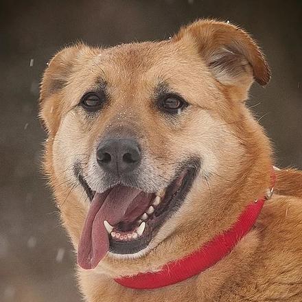 Фаина собака из приюта на пристройство - Фаина ищет дом!