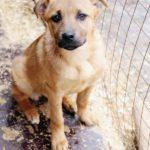 Фанта собака из приюта на пристройство, частный приют Зов Предков zovpredkov.net фото 1