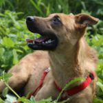 Фанта собака из приюта на пристройство, частный приют Зов Предков zovpredkov.net фото 8