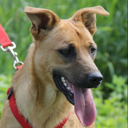 Фанта собака из приюта на пристройство -  Фанта ищет дом!