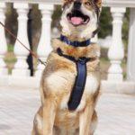 Дина собака из приюта на пристройство приют для бездомных животных Зов Предков zovpredkov.net фото 3