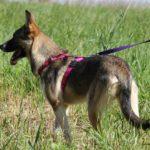 Малибу собака из приюта на пристройство приют для бездомных животных Зов Предков zovpredkov.net фото 9