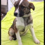 Малибу собака из приюта на пристройство приют для бездомных животных Зов Предков zovpredkov.net фото 12