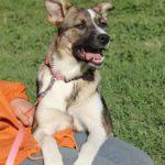 Малибу собака из приюта на пристройство приют для бездомных животных Зов Предков zovpredkov.net фото 11