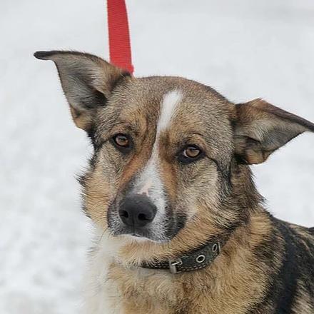 Малибу собака из приюта на пристройство -  Малибу ищет дом!