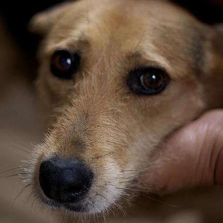 Малышка собака из приюта на пристройство -  Малышка ищет дом!