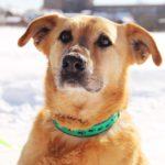 Фаина собака из приюта на пристройство Зов Предков zovpredkov.net фото1