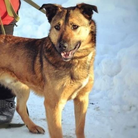 Норрис собака из приюта на пристройство - Норрис ищет дом!