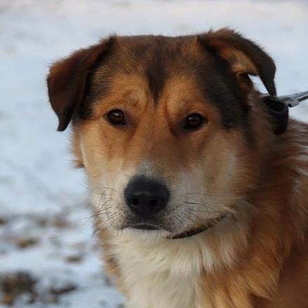 Рыжий собака из приюта на пристройство - Рыжий ищет новый дом!