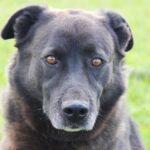 Барон собака из приюта на пристройство, частный приют для бездомных животных Зов Предков zovpredkov.net фото 12