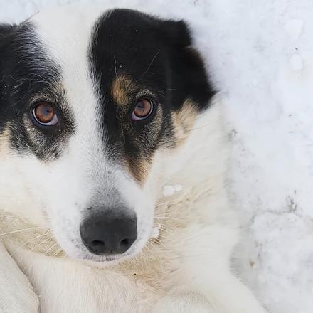 Умка собака из приюта на пристройство - Умка ищет дом!