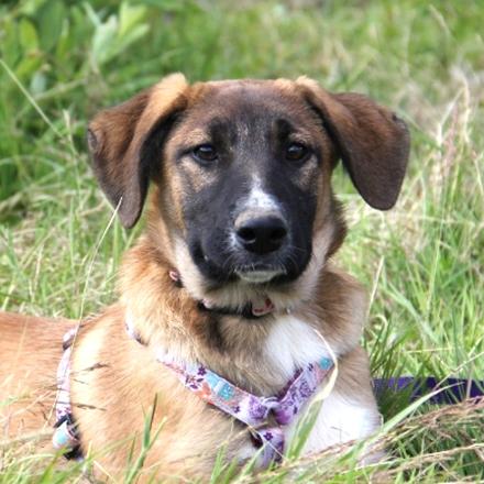 Валенсия собака из приюта на пристройство - Валенсия ищет дом!