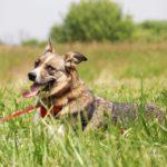 Малибу собака из приюта на пристройство приют для бездомных животных Зов Предков zovpredkov.net фото 7