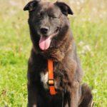 Барон собака из приюта на пристройство, частный приют для бездомных животных Зов Предков zovpredkov.net фото 7