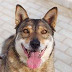 Дина собака из приюта на пристройство приют для бездомных животных Зов Предков zovpredkov.net фото 6