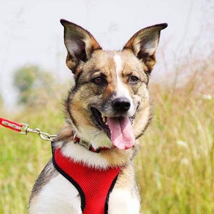Малибу собака из приюта на пристройство, частный приют Зов Предков zovpredkov.net