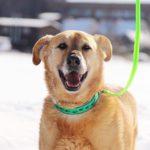 собака из приюта на пристройство Зов Предков zovpredkov.net фото3