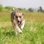 Малибу собака из приюта на пристройство приют для бездомных животных Зов Предков zovpredkov.net фото 6