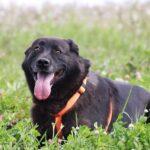 Барон собака из приюта на пристройство, частный приют для бездомных животных Зов Предков zovpredkov.net фото 10