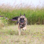 Марта собака из приюта на пристройство, частный приют Зов Предков zovpredkov.net фото 7