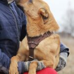 Фанта собака из приюта на пристройство, частный приют Зов Предков zovpredkov.net фото 9