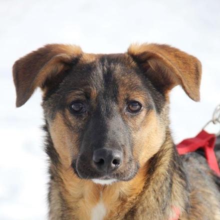Дейли собака из приюта для бездомных животных Зов Предков на пристройство