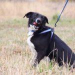 Николь собака из приюта на пристройство, частный приют Зов Предков zovpredkov.net фото 7