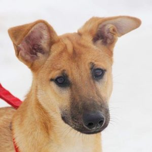 Лира собака из приюта Зов Предков zovpredkov.net