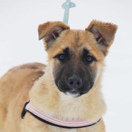 Райли собака из приюта для бездомных животных Зов Предков на пристройство