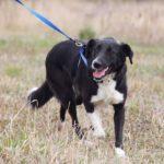 Николь собака из приюта на пристройство, частный приют Зов Предков zovpredkov.net фото 4