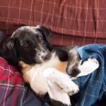 Николь собака из приюта на пристройство, частный приют Зов Предков zovpredkov.net фото 22