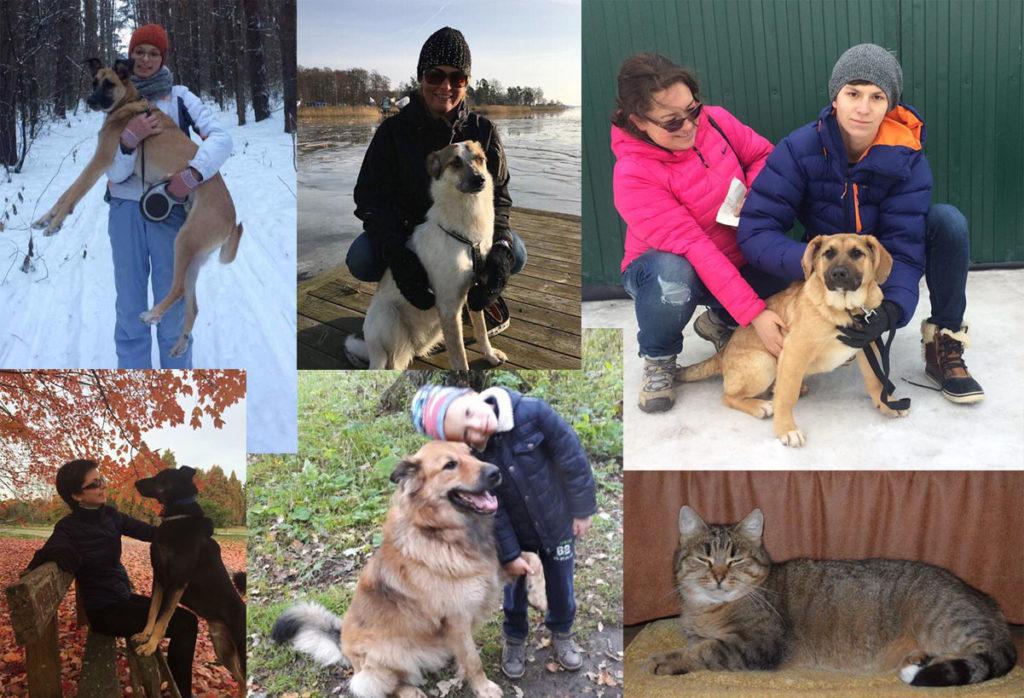 Мы дома! Собаки из приюта Зов Предков zovpredkov.net