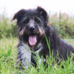 Мэлвин собака из приюта на пристройство приют для бездомных животных Зов Предков zovpredkov.net фото 12