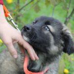 Брусника собака из приюта для бездомных животных Зов Предков на пристройство zovpredkov.net