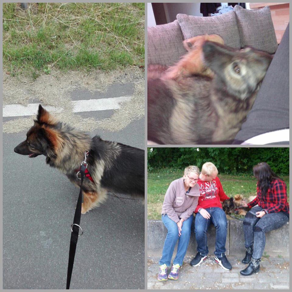 Счастливая история Фиби! Собака Фиби из приюта для бездомных животных нашла новый дом! приют Зов Предков zovpredkov.net