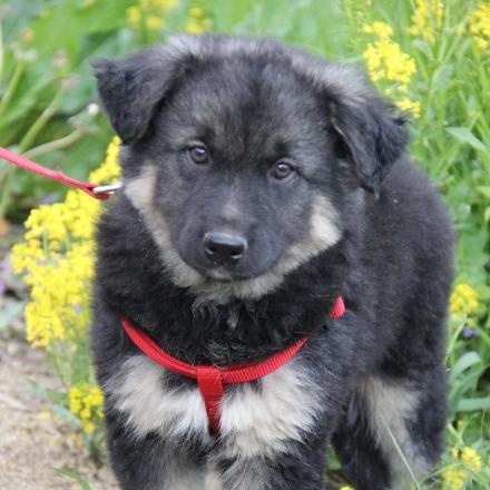 Калина собака из приюта для бездомных животных Зов Предков на пристройство zovpredkov.net