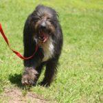 Мэлвин собака из приюта на пристройство приют для бездомных животных Зов Предков zovpredkov.net фото 1