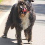 Мэлвин собака из приюта на пристройство приют для бездомных животных Зов Предков zovpredkov.net фото 3