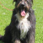 Мэлвин собака из приюта на пристройство приют для бездомных животных Зов Предков zovpredkov.net фото 4