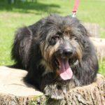 Мэлвин собака из приюта на пристройство приют для бездомных животных Зов Предков zovpredkov.net фото 9